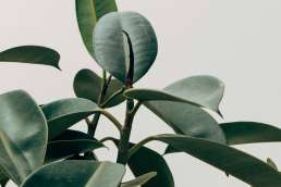 Rounded green plant