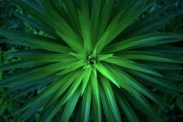 Spiky green plant