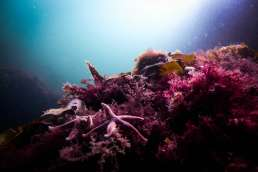 Underwater photo of coral and sea stars