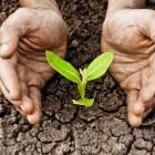 nurture-plant-thumb