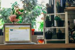 Laptop with emails surrounded by potted plants and next to a cup of tea