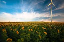 Field of sunflowers with a windmill and cloudy blue sky in background