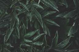 Close up of dark green leafy plant
