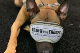 Dog with TrainOurTroops goggles